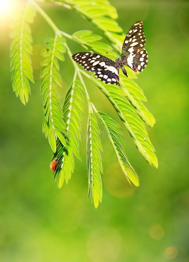 Insects On A Green Leaf Royalty Free Stock Images