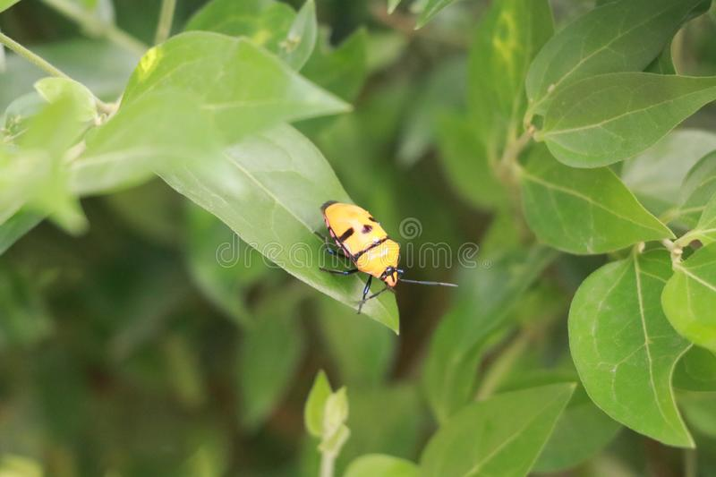 Insects on a green leaf stock images