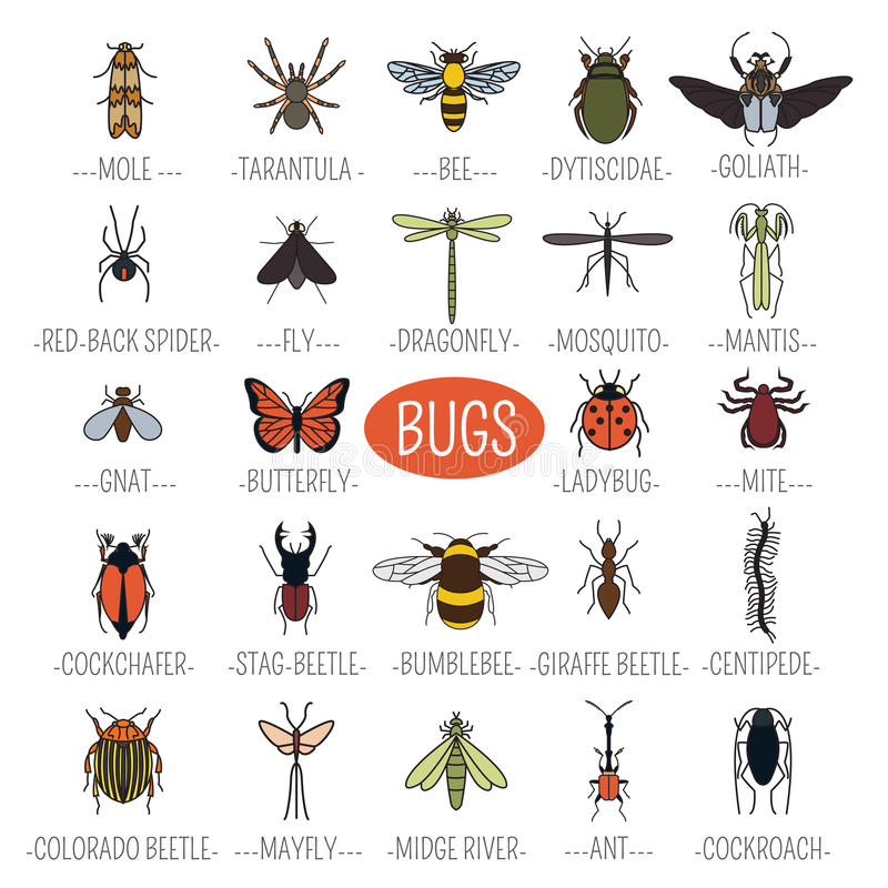 Free Insects Icon Flat Style. 24 Pieces In Set. Colour Version Stock Images - 70780544