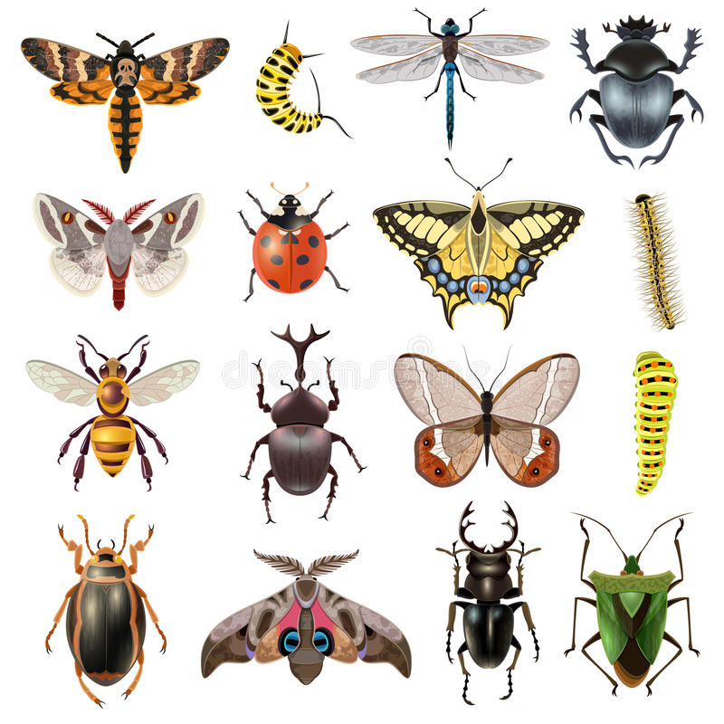 Insects Icons Set stock illustration