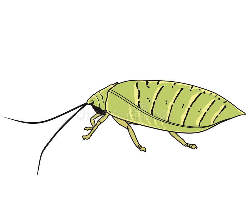 Insects with its antenna stock illustration