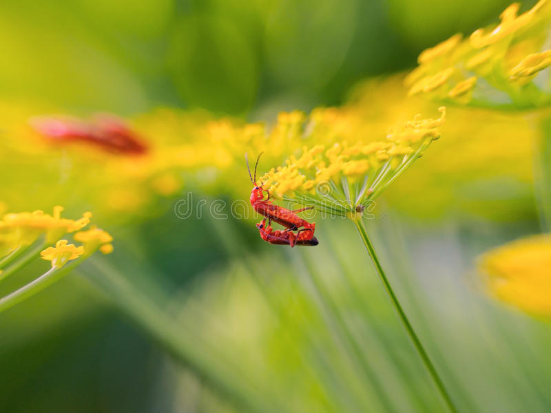 Insects nature grass life royalty free stock photos