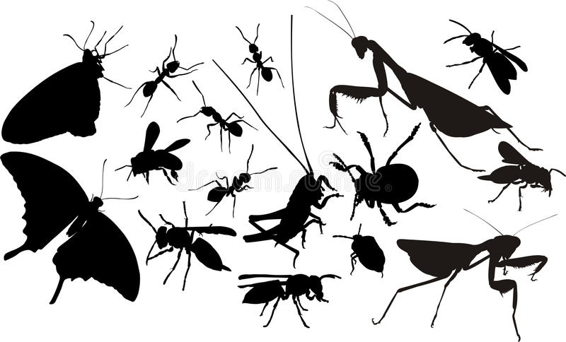 Insects Silhouettes Royalty Free Stock Image