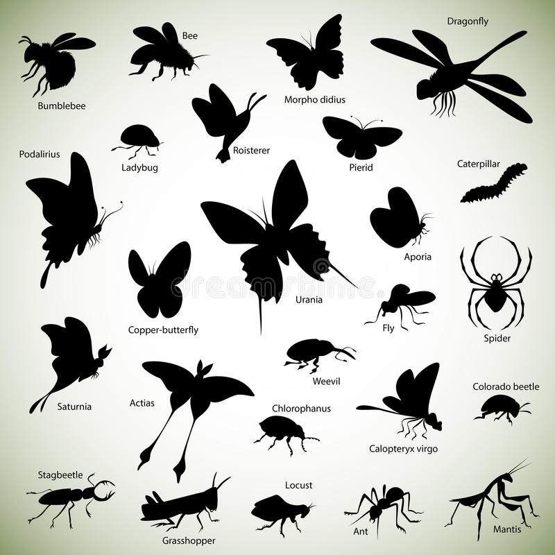 Download Insects silhouettes stock vector. Image of lady, stagbeetle - 36637153