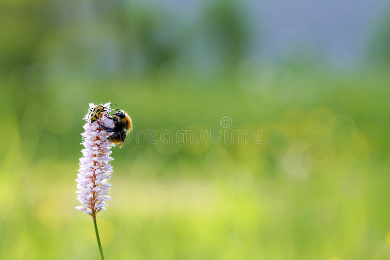 Download Insects. stock image. Image of insects, field, small - 39493211