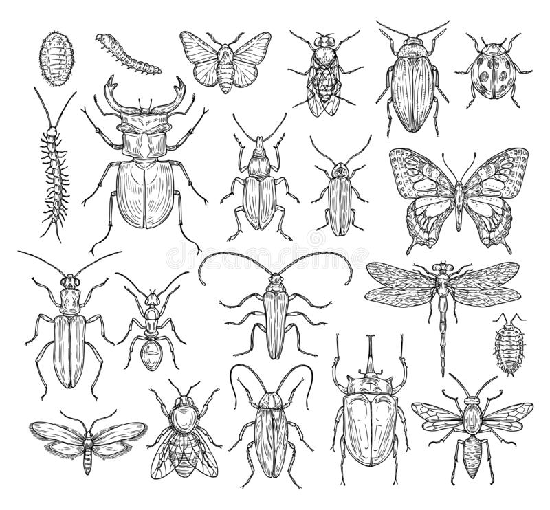 Insects sketch. Butterfly, beetle and fly, ant. Dragonfly, ladybug and bee. Vintage hand drawn engraving vector stock illustration