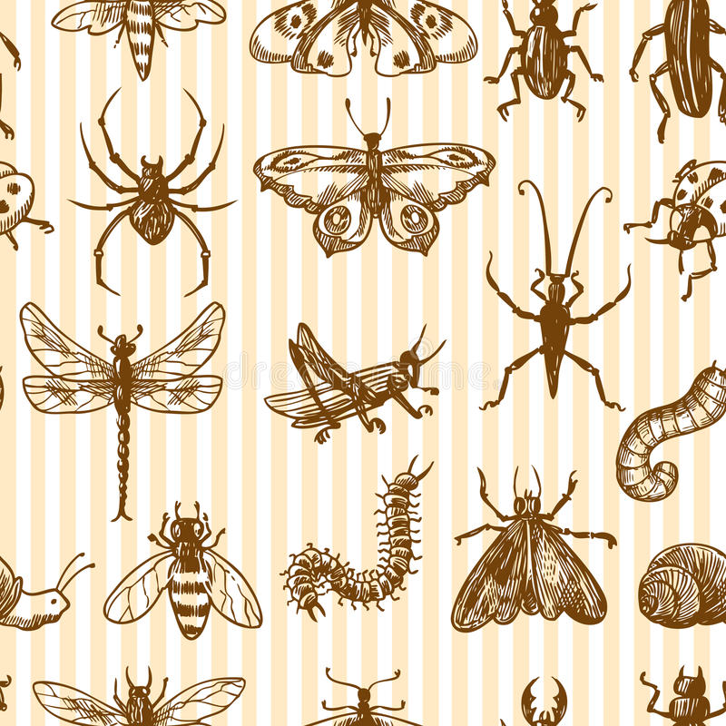 Insects sketch seamless pattern monochrome. Insects sketch monochrome decorative seamless pattern with snail grasshopper centipede vector illustration vector illustration