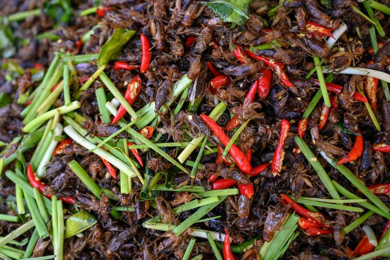 """Ulična hrana"" - STREET FOOD Insects-street-food-asia-asian-fast-kitchen-prepared-to-sell-cambodia-fried-chilly-spring-onions-market-style-ready-144728942"