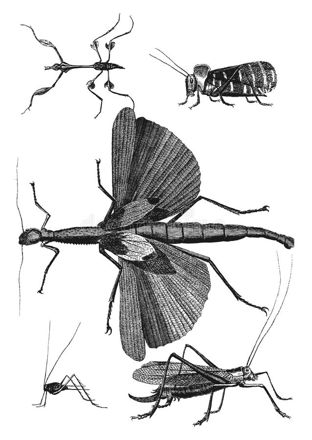 Insects. Vintage engraved illustration. Diderot and d'Alembert encyclopedia (1751-1780 vector illustration