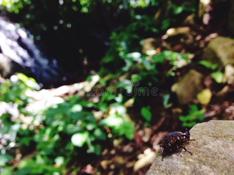 Insects and the waterfall view stock photo