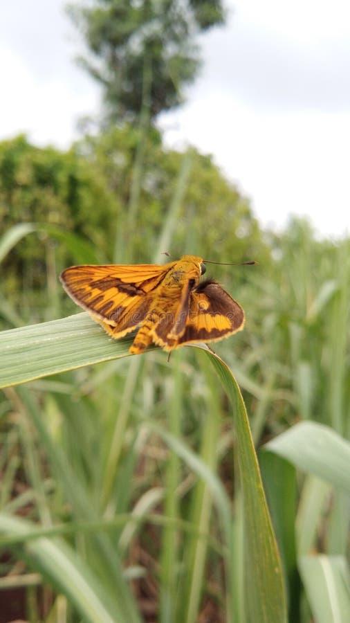 Insectschoonheid royalty-vrije stock afbeelding