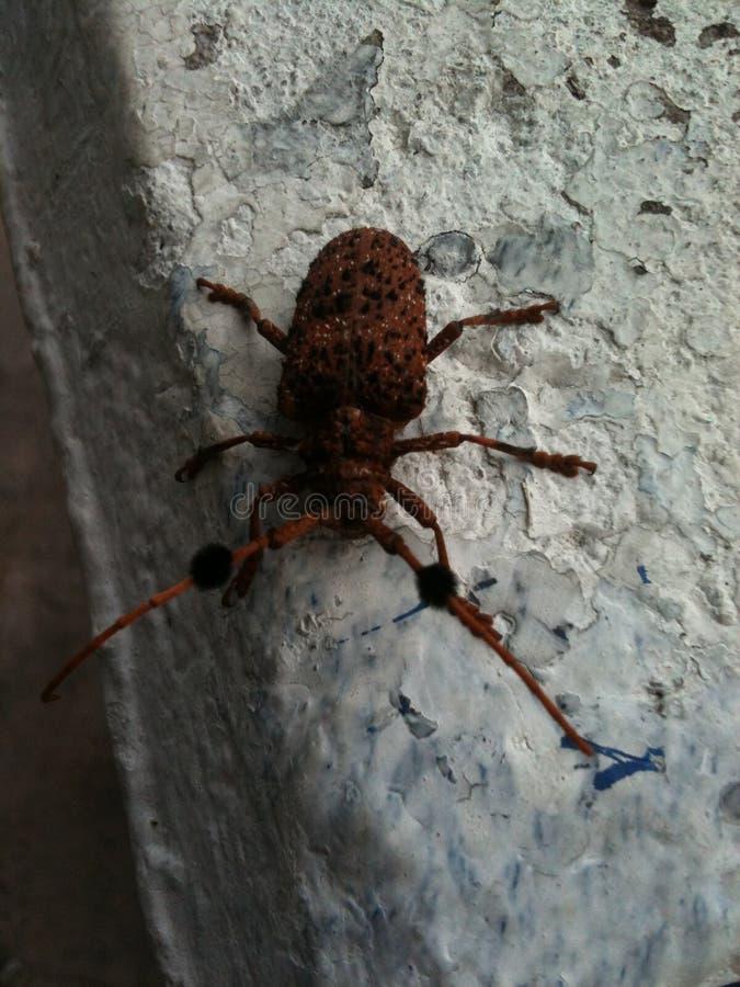Insedt della mosca fotografia stock