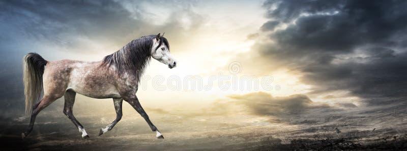 Insegna con il cavallo arabo contro fondo del cielo tempestoso fotografie stock libere da diritti