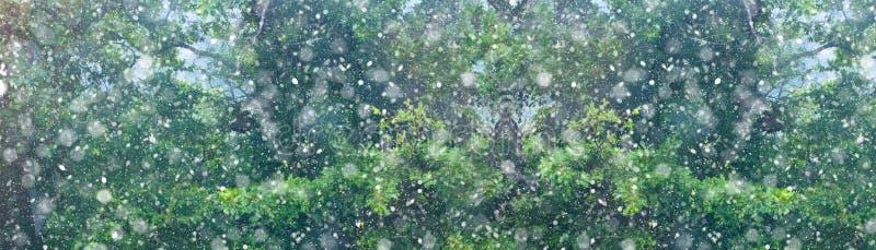 Insegna del fondo della foresta di caduta della neve di Natale fotografia stock libera da diritti