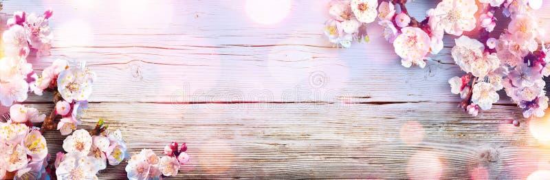 Insegna della primavera - fiori rosa fotografia stock libera da diritti