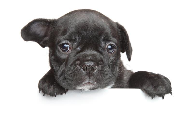 Insegna di bianco del cucciolo del bulldog francese immagini stock