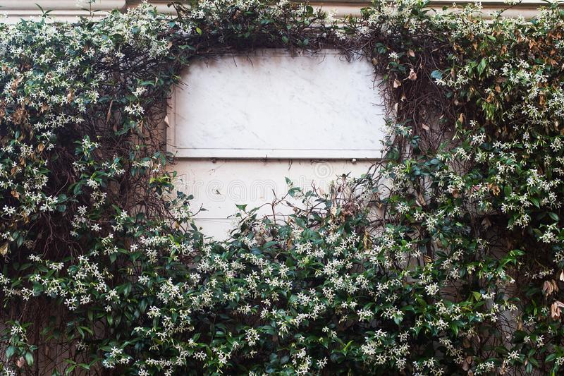 Insegna di marmo bianca coperta in foglie e fiori bianchi fotografia stock libera da diritti