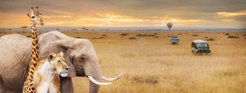 Insegna di Safari Animals Africa Scene Web fotografie stock