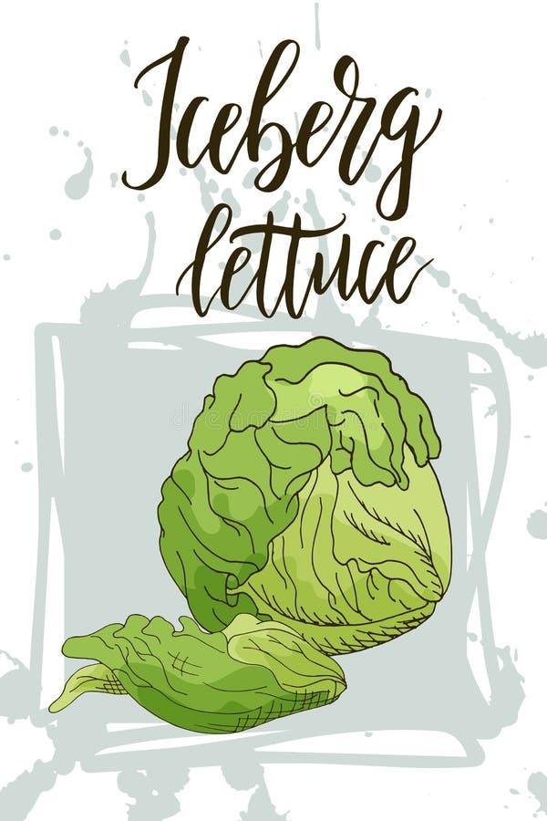 Insegna di verdure dell'alimento Schizzo della lattuga di iceberg Manifesto dell'alimento biologico Illustrazione di vettore illustrazione di stock