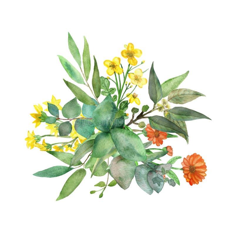 Insegna floreale verde dipinta a mano dell'acquerello con le piante del campo ed il dollaro d'argento dell'eucalyptus isolati su  illustrazione vettoriale