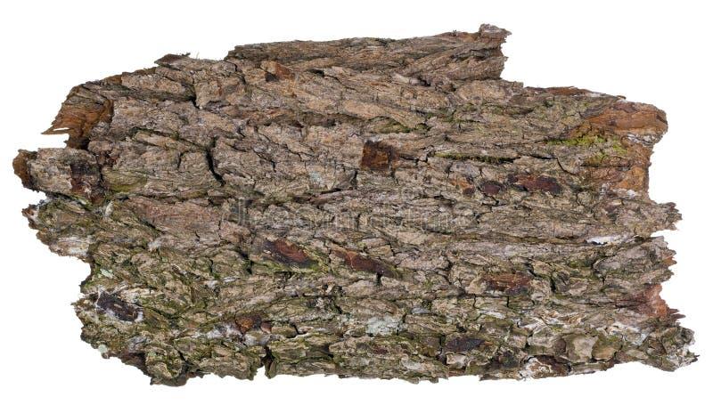 Insegna isolata lerciume della quercia della foresta immagine stock