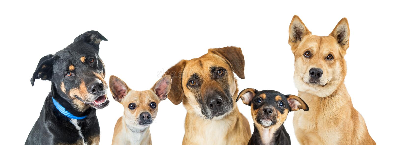 Insegna orizzontale di web dei vari cani immagini stock