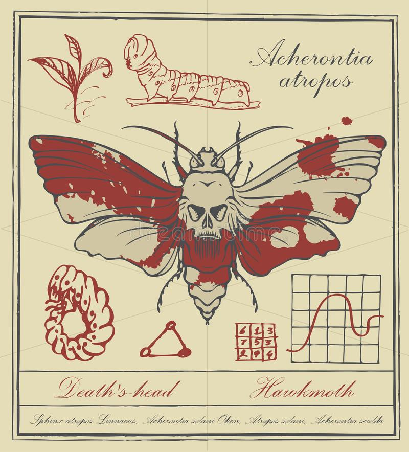 Insegna retro con il disegno di una testa morta della farfalla illustrazione di stock