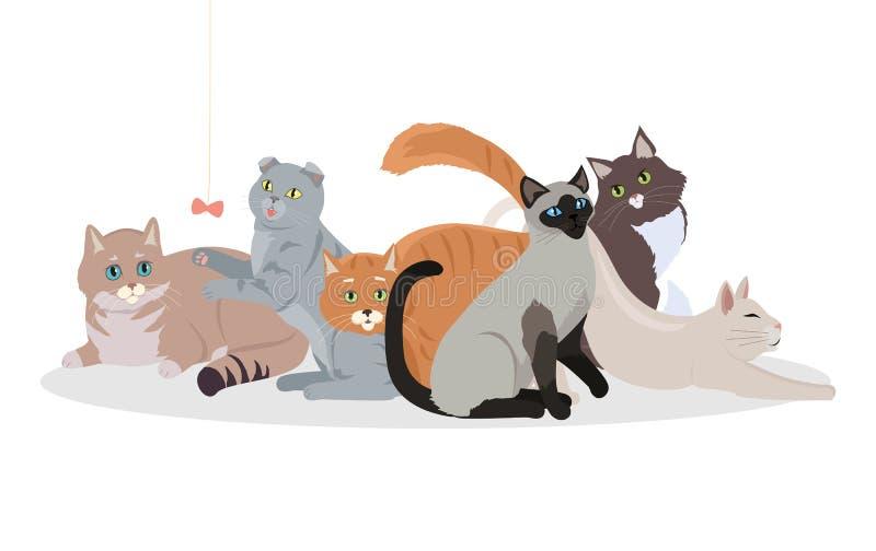 Insegna stabilita di web di vettore di Cat Breeds Cute Pet Animal royalty illustrazione gratis