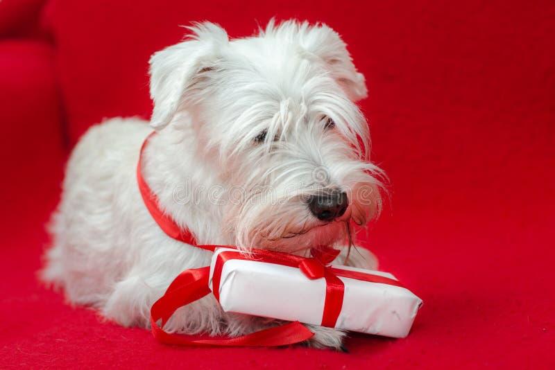 Insegua con i regali di Natale fotografia stock libera da diritti