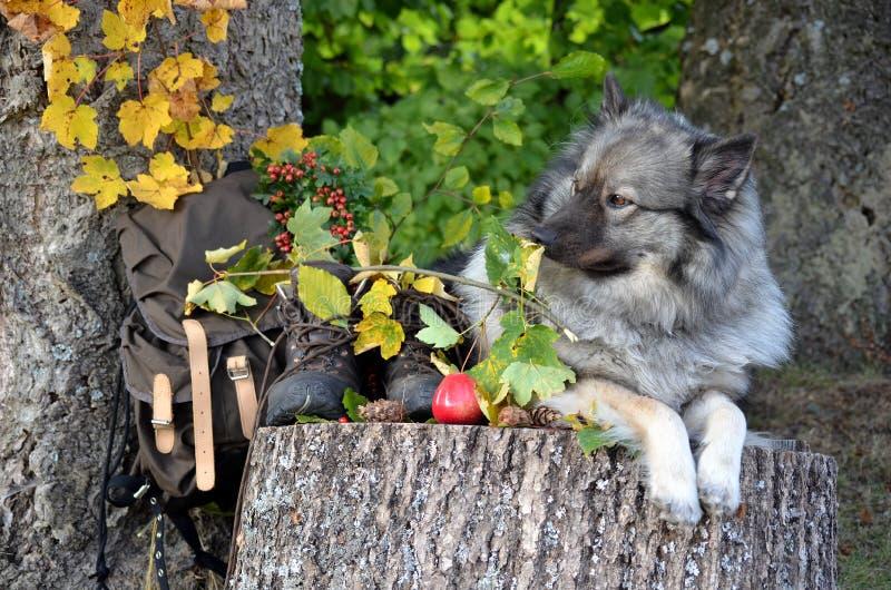 Insegua l'autunno fotografie stock