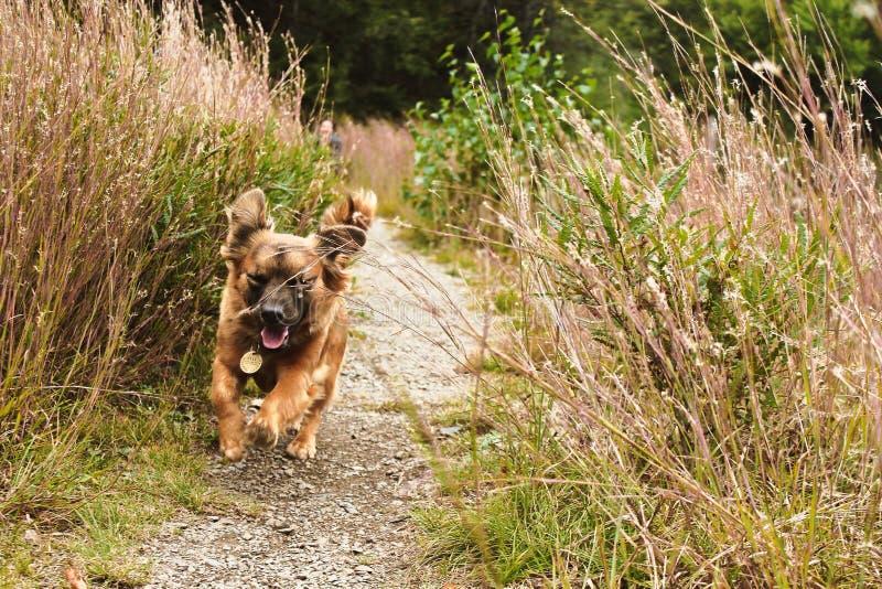 Insegua il funzionamento dell'animale domestico mentre sorridono nel paesaggio erboso immagini stock libere da diritti