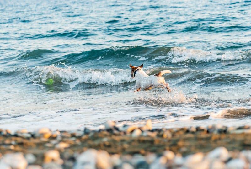 Insegua il gioco con il disco di volo alla spiaggia del mare al giorno caldo dell'estate fotografie stock libere da diritti