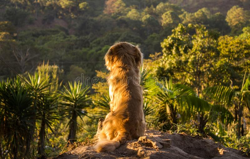 Insegua l'osservazione del paesaggio sedersi su una roccia fotografie stock