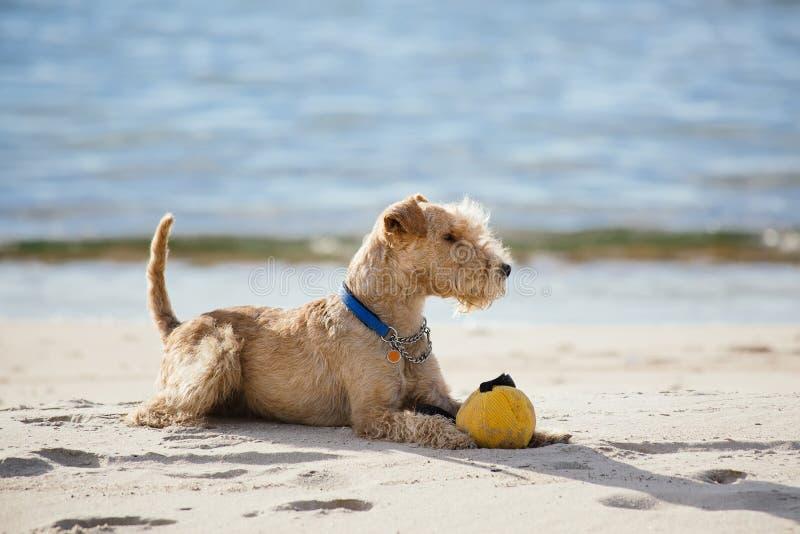 Insegua la menzogne sulla spiaggia con una palla gialla fotografia stock