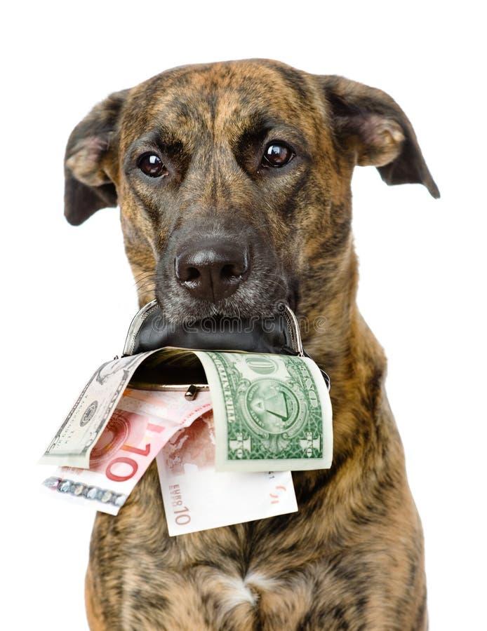 Insegua la tenuta della borsa con soldi nella sua bocca Isolato immagine stock