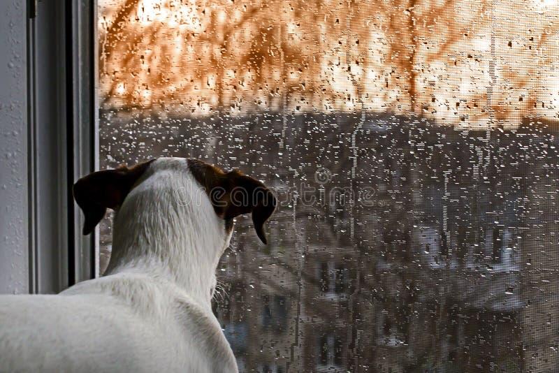 Insegua lo sguardo fuori della finestra nella pioggia immagini stock libere da diritti