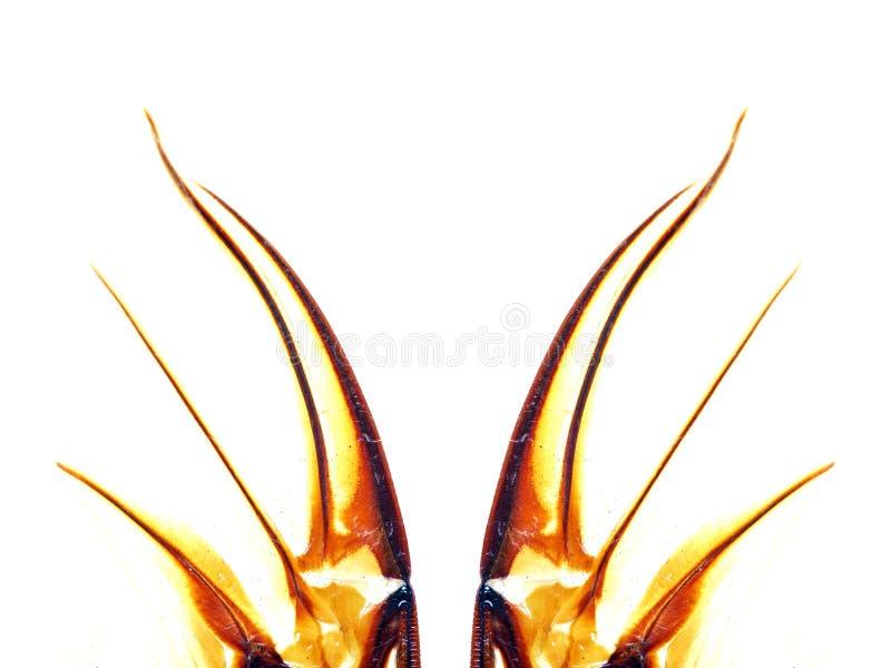 insektów abstrakcjonistyczni skrzydła ilustracja wektor
