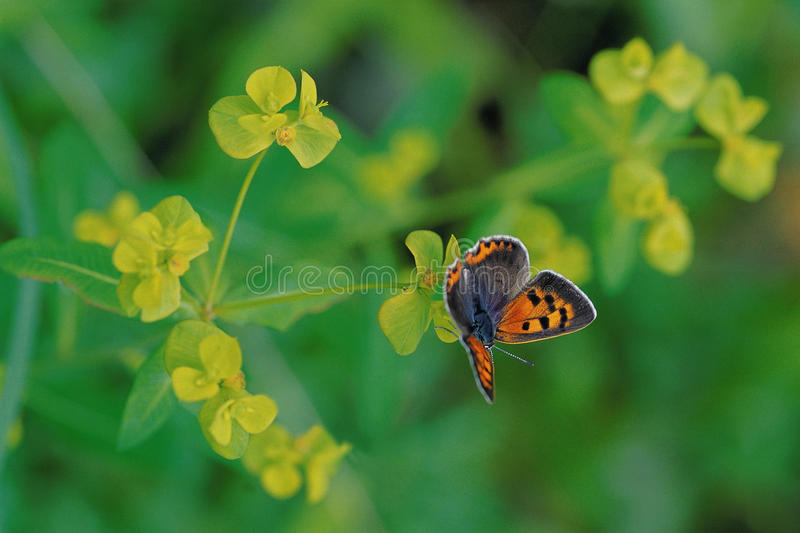 Insektów wizerunki fotografia royalty free