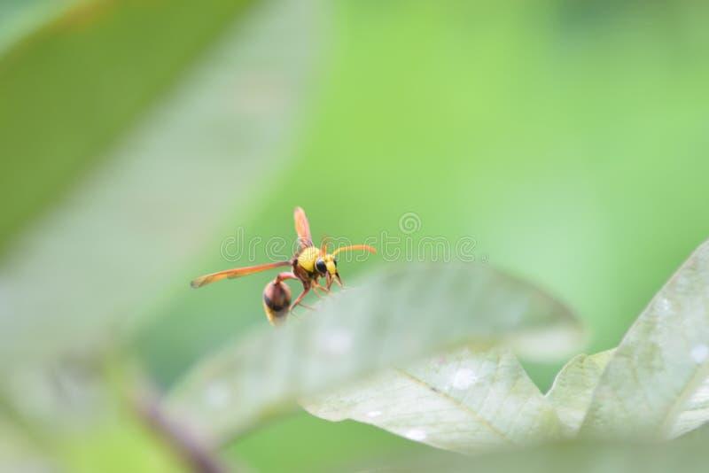 insekt lizenzfreie stockfotos
