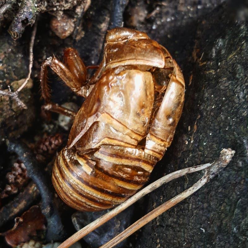 insekt obrazy royalty free