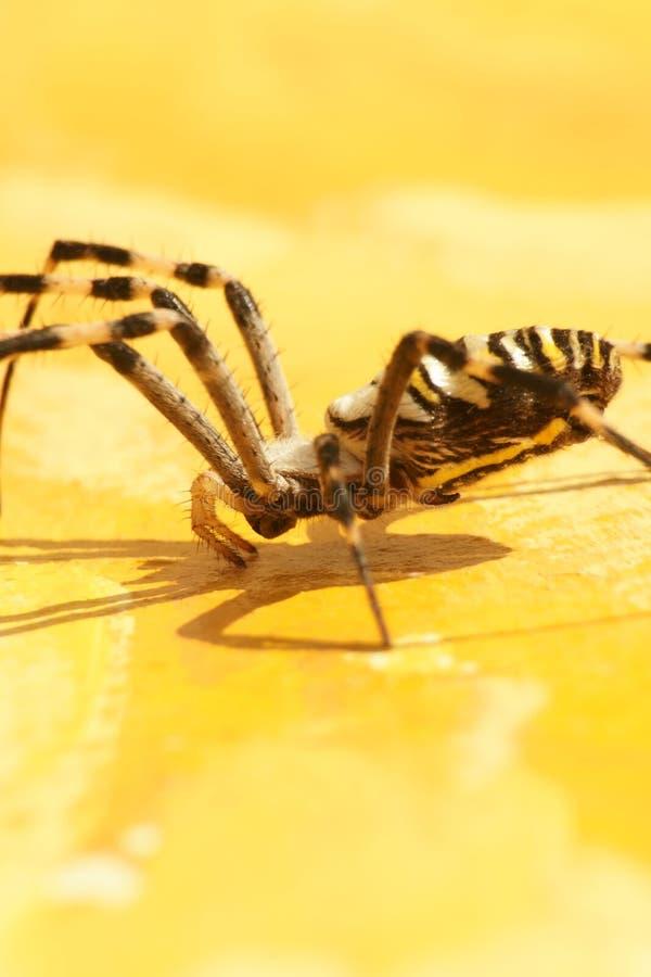 insekt fotografia stock