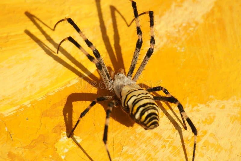 insekt zdjęcia royalty free