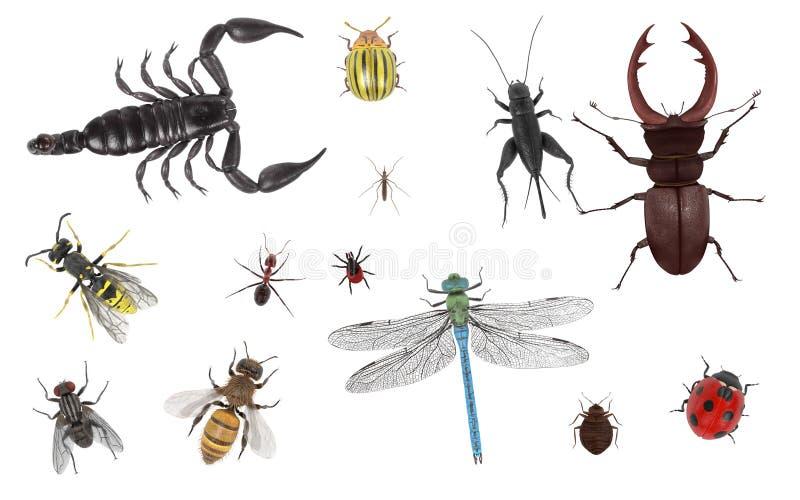 insekt ilustracja wektor