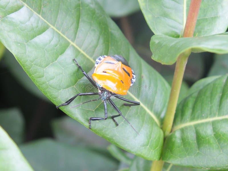insekt stockfoto