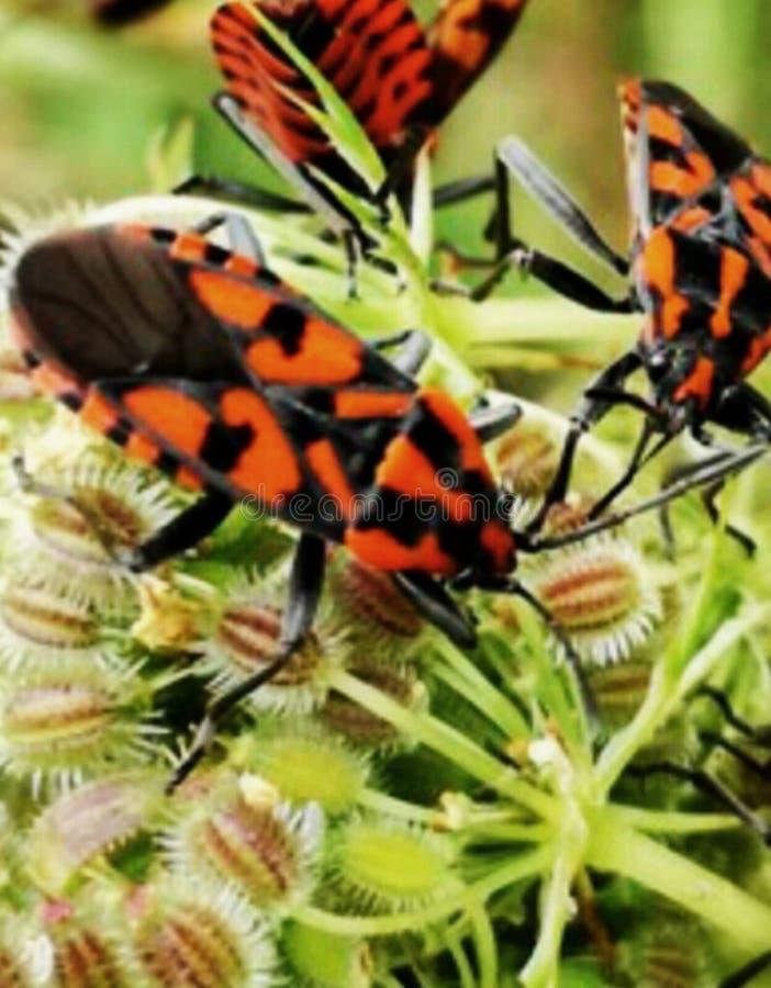 insekt stockfotografie