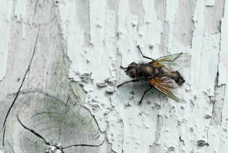 Insekt auf Holz lizenzfreies stockbild