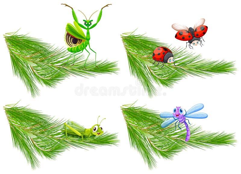 Insekt auf Kiefer-Niederlassung vektor abbildung