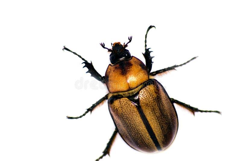 Insekt auf Weiß stockfoto