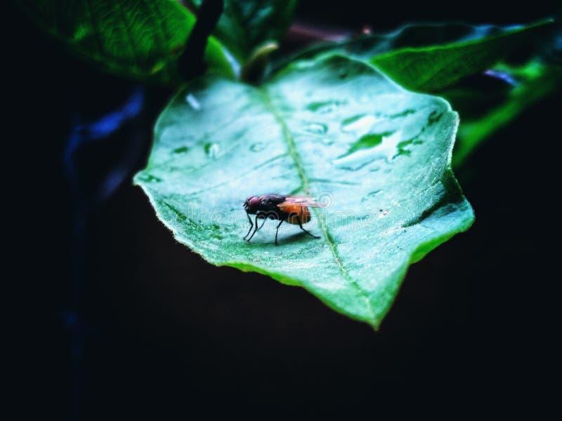 Insekt, das auf einem Blatt sitzt lizenzfreie stockbilder