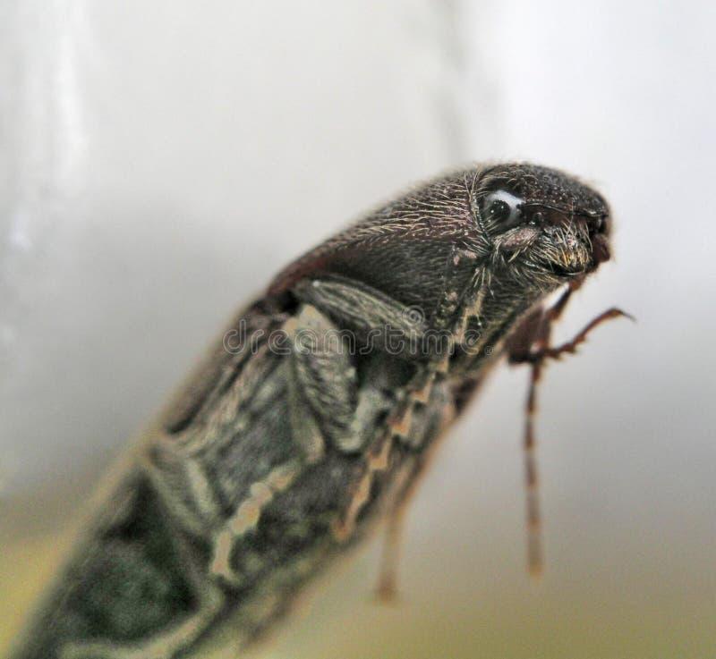 Insekt, das Projektor betrachtet lizenzfreie stockfotografie